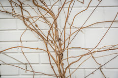 Textured Background of Branches Against an Wall Stock Image