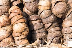 Textured background of brown coconuts. Pile of discarded coconut husks in Thailand Royalty Free Stock Photo