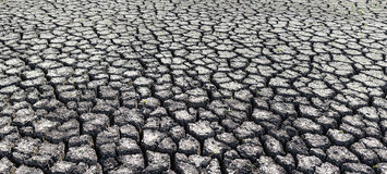 Textured background of dry cracked earth surface.  Royalty Free Stock Photo