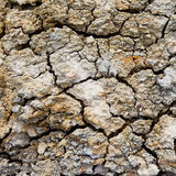 Background of dry cracked soil surface. Royalty Free Stock Photos