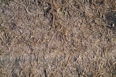 Textured background from the background of dry grass and soil. Autunm season Stock Images