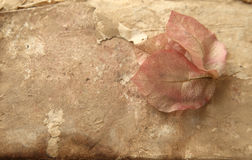 Textured background with fading flowers Royalty Free Stock Images