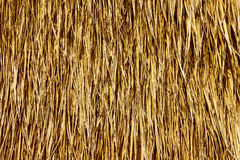 Textured background of golden straw Stock Images
