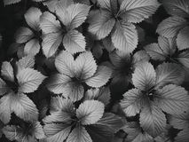 Textured background of green leaves of a plant.  stock photography
