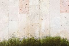 Textured background vertical facing tiles from shell stone with traces of moss formation in the form of green mold. Grunge background with elements of living Stock Images