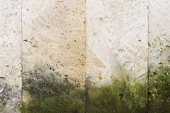 Textured background vertical facing tiles from shell stone with traces of moss formation in the form of green mold. Grunge background with elements of living Stock Image