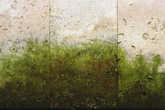 Textured background vertical facing tiles from shell stone with traces of moss formation in the form of green mold. Grunge background with elements of living Royalty Free Stock Images