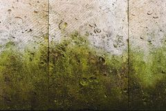 Textured background vertical facing tiles from shell stone with traces of moss formation in the form of green mold. Grunge background with elements of living Royalty Free Stock Photography