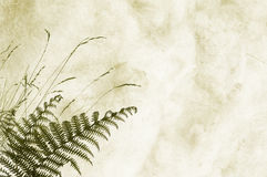 Textured Background With Fernery - Space For Text Royalty Free Stock Photo