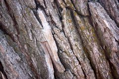 Textured bark Stock Photos