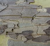 Textured Bark. Royalty Free Stock Photography