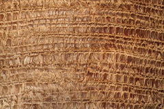Textured Bark of a Palm Tree Royalty Free Stock Image