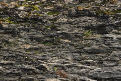 Textured basalt background thin stone fibers in the cut. natural volcanic formations.  royalty free stock photography