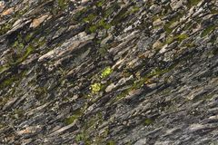 Textured basalt background thin stone fibers in the cut. natural volcanic formations.  royalty free stock image