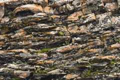 Textured basalt background thin stone fibers in the cut. natural volcanic formations.  royalty free stock photos