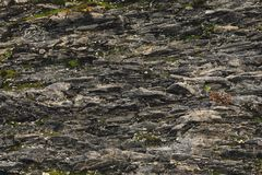 Textured basalt background thin stone fibers in the cut. natural volcanic formations.  stock photos