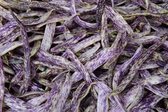 Textured Beans Stock Image
