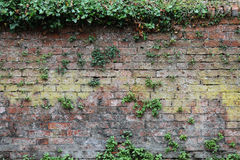 Textured Brick Wall Royalty Free Stock Images