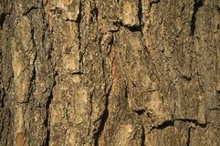 Textured brown bark background Royalty Free Stock Photos