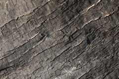 Textured Burnt Tree Root Royalty Free Stock Images