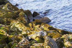 Textured cliffs Stock Image