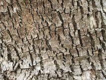 Textured close up of rough tree bark royalty free stock image