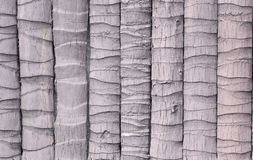 Textured of coconut wood. Stock Photos