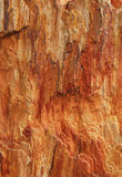 Textured colorful petrified tree as a background Stock Photography