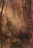 Textured colorful petrified tree trunk as a backgroun Stock Image