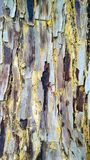 Textured and coloured tree bark closeup. With red maroon grey and blue royalty free stock photos
