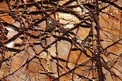 Textured cracked rock Stock Image