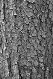 Textured deciduous bark in black and white. Craggy deep vertical grooves and lines decorate the surface of the curved trunk of a hardwood deciduous tree in the stock photos