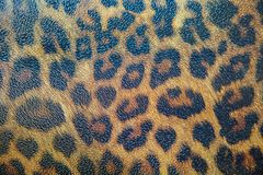 Textured detail of leopard fur background. Close up Stock Photography