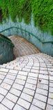 Textured do teste padrão da telha abaixo das escadas com a videira verde completa na parede áspera no parque do jardim imagem de stock royalty free