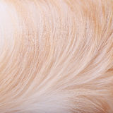 Textured dog hair background Stock Photo