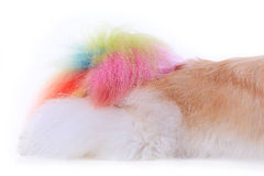 Textured dog hair style colorful tail Royalty Free Stock Photos