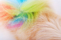 Textured dog hair style colorful tail Stock Photos