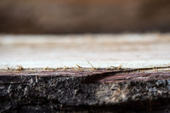 Textured drewno powierzchnia Zdjęcie Royalty Free