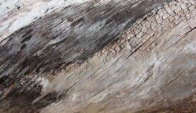 Textured Driftwood Obraz Stock