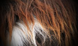 Textured fur on a goat Stock Photo
