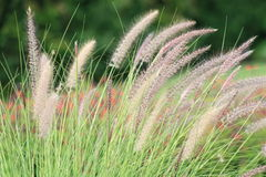 Textured Grass Stock Image
