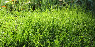 Textured green grass Royalty Free Stock Images