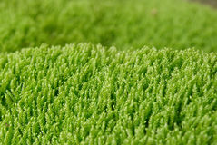 Textured green grass. Royalty Free Stock Photos