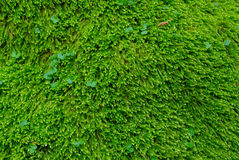 Textured green grass. Stock Photography