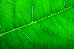 Textured green leaf close up. Stock Images