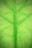 Textured green leaf plants macro Stock Image