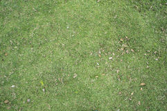 Textured ground grass green concept Royalty Free Stock Photos
