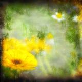 Textured grunge background daisy Stock Photography