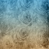 Textured grunge background with roses Royalty Free Stock Image