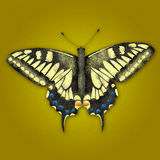 Textured illustration of butterfly Royalty Free Stock Photography